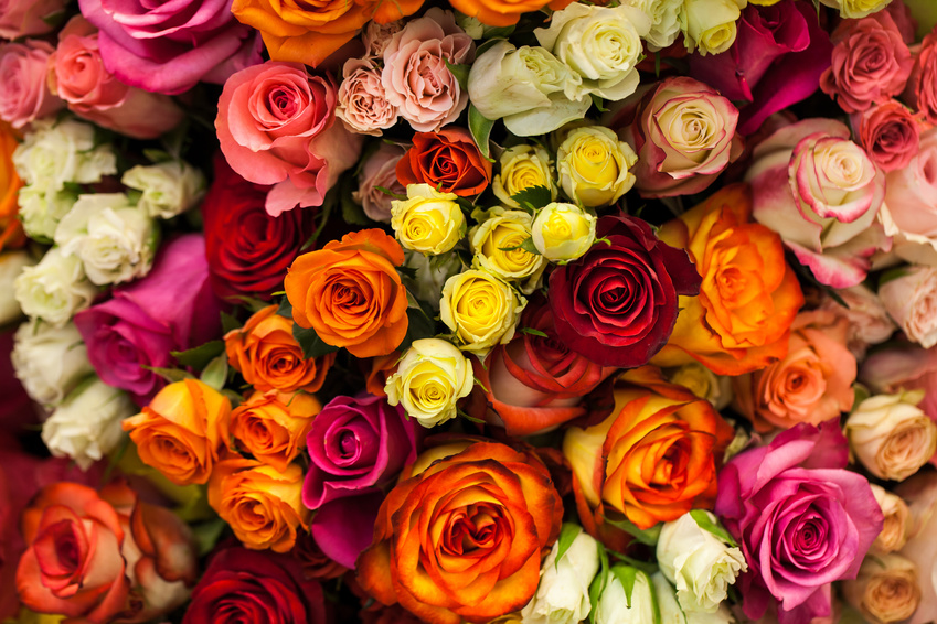 Beautiful Bouquet Of Multicolored Roses